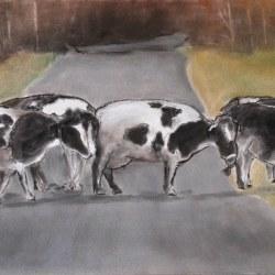hi-res_cows